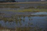 Kluane_Lake_Sheep_Mt._13_von_16_