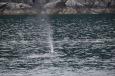 Seward_Kenai_Fjord_NP_23_von_23_