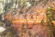 Grand Canyon-Wanderung Clff Spring Trail