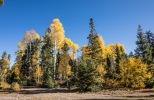 Grand Canyon - Herbstlandschaft