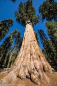 Sequoia NP General Sherman Tree