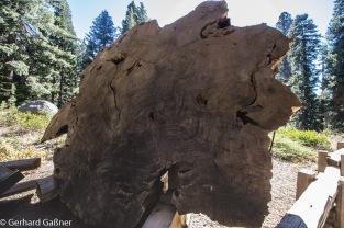 Sequoia NP General Grandt Grove