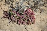 Blüten in der Wüste