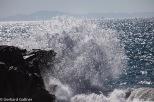 Sea Lions Arch Cove