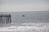 Grauwale am Pismo Beach