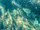 Unterwasserwelt Cabo Pulmo